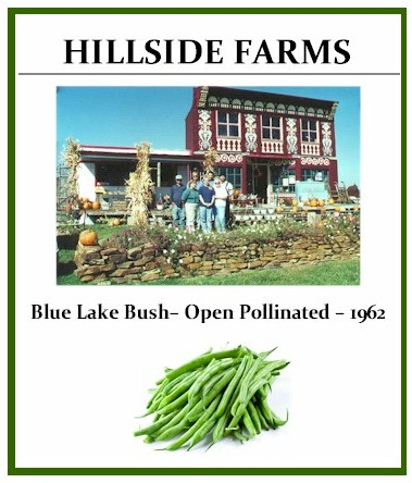 Green Bean Blue Lake Bush– Open Pollinated – 1962