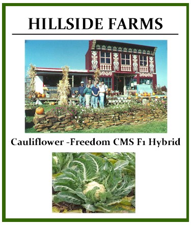 Cauliflower Freedom CMS F1 Hybrid