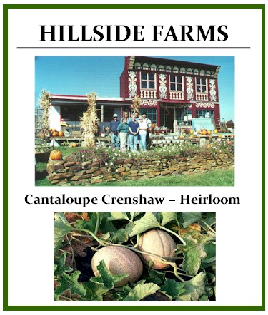 Crenshaw Cantaloupe – Heirloom