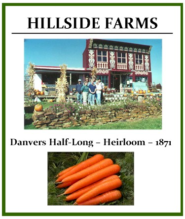 Danvers Carrots Half-Long – Heirloom – 1871